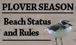 Western Snowy Plover nesting season - beach status and rules